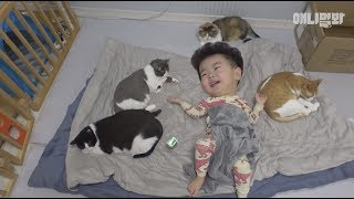 Is it safe for babies to live with dogs and cats?