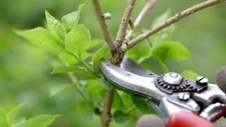 Gardening Advice | Pruning Spring Flowering Shrubs