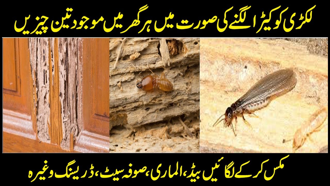 How To Control Wooden Termite Deemak Some Tricks And Tips Details In Urdu Hindi Youtube