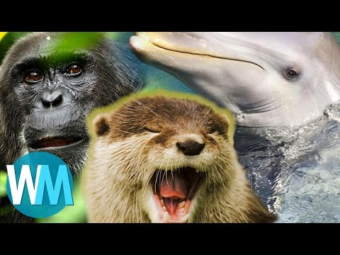 Top 10 Things We Learned From Planet Earth