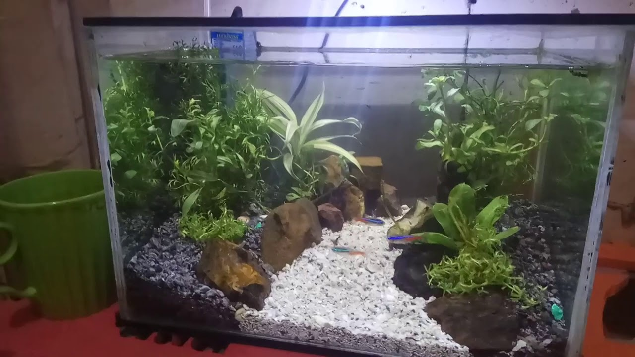 Aquascape Tank 30cm Low Budget Youtube