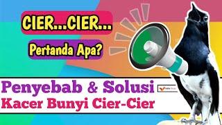 Download Mp3 Cara Mengatasi Kacer Bunyi Cier