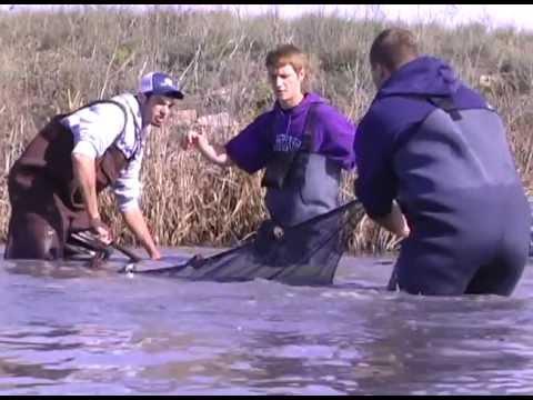 Barton Wildlife Science Students Visit Wetlands  & Cheyenne Bottoms Oct  2011