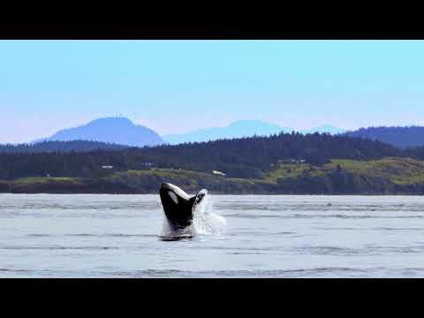 Our orcas thank you