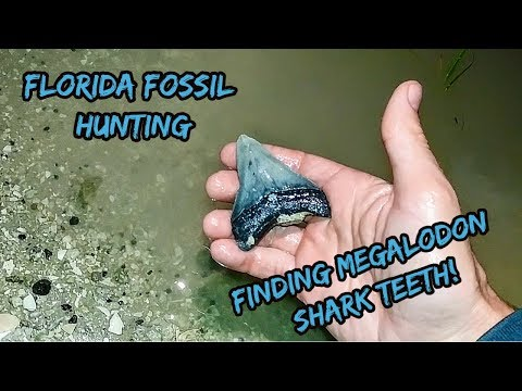 Florida Megalodon Shark Tooth Hunting | A Change in Luck for the Better!