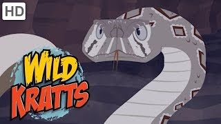Wild Kratts 🦡🐍 Out for the Hunt! | Kids Videos