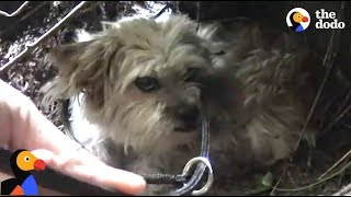 SCARED Dog Avoids Being Rescued Until...