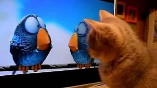 кот смотрит телевизор ПРИКОЛ!