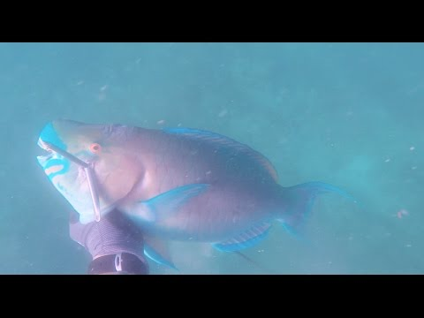 Oahu Spearfishing Winter '16-'17