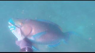 Oahu Spearfishing Winter '16-'17