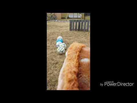 Hoppning med boppan | | lördag 8 april || voice over || mp3