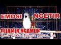 Dijamin Ngamuk Pancingan Supaya Cipoh Sirtu Emosi Ngetir Marah  Mp3 - Mp4 Download