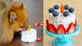 How to Make a Birthday Cake FOR DOGS | PADDINGTON