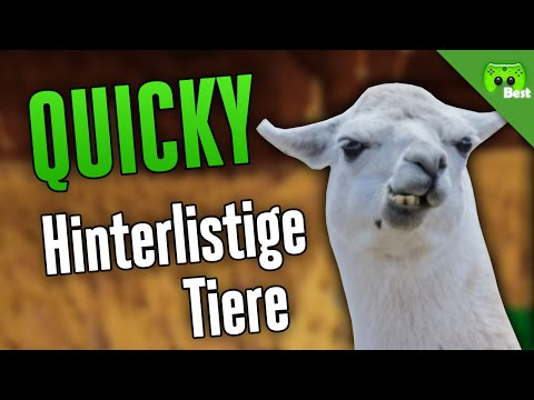 HINTERLISTIGE TIERE 🎮 Quicky #169 | Best of PietSmiet