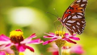 Природоведение. Растения