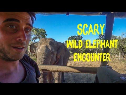 Sri Lanka Best Wildlife Experience Yala National Park Elephant Safari - Travel Vlog