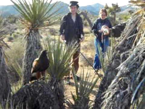 Falconry Educational Tour - Elite Land Tours, Palm Springs, California