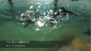 2011年7月16日 東武動物公園で行われた大人の飼育体験「ペンギンコース...