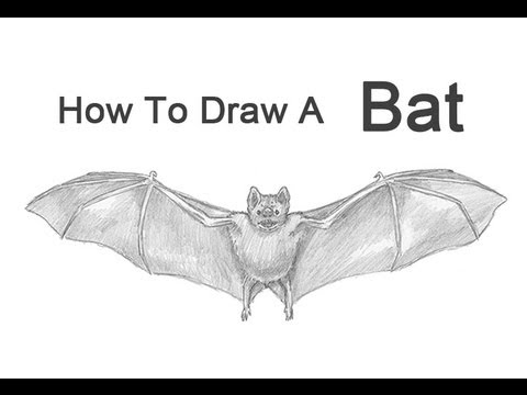 how to draw a bat (vampire bat) youtubehow to draw a bat (vampire bat)
