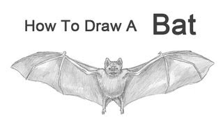 How to Draw a Bat (Vampire Bat)