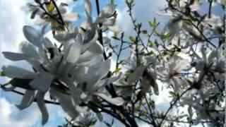 Красивая мелодия Души.flv