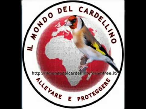 File Audio Canto del Cardellino Traccia 4