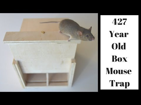 427 Year Old Style Mouse Trap In Action. Mascall Square Box Mouse Trap