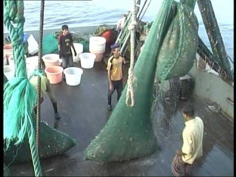 OMG!! See Fishing In Bay Of Bengal