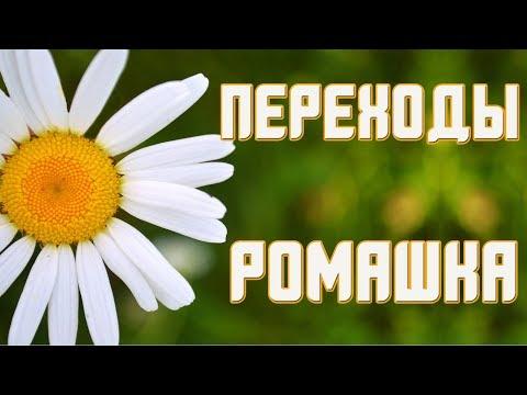 Ромашка белая Переходы Proshow Producer