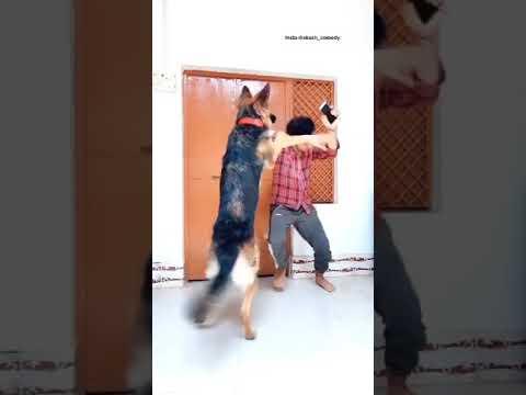 50 bar bola h Padai m dheeyan lagao ??? funny dog video | #shorts | Akash comedy