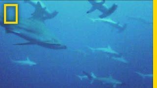 Social Sharks: