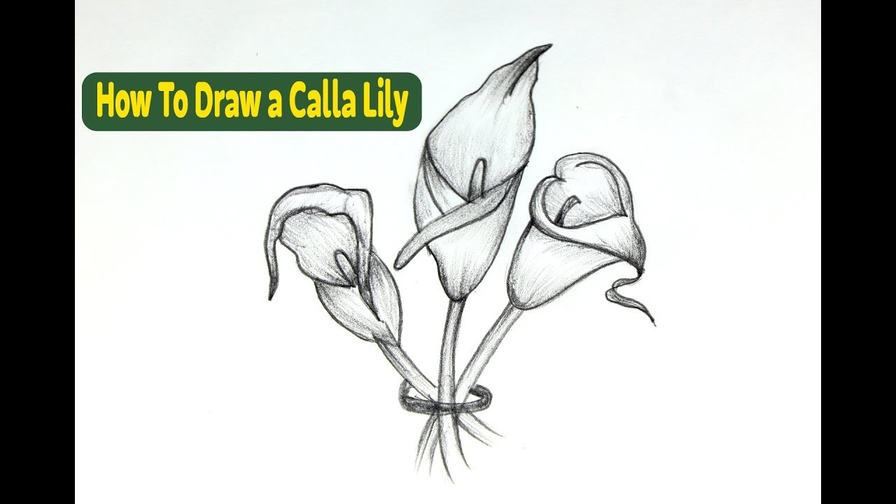 how to draw a calla lily step by step for beginners how to draw flowers