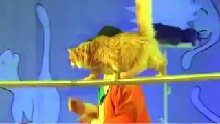 Театр кошек Куклачева в Усть Илимске