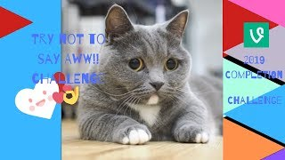 2019** Try not to say AWW!!!! ** challenge cute dog/ cat videos.