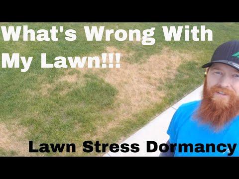 How to repair Brown Dead Grass Dormancy spots. Dead Spots in my lawn after fertilizer application.