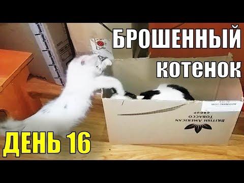 """игра вконтакте """"Орион"""" #13 (Боссы)из YouTube · С высокой четкостью · Длительность: 31 мин26 с  · Просмотры: более 536000 · отправлено: 27.03.2014 · кем отправлено: 1st1"""