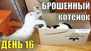 Брошенный котенок  День 16 Спасение бездомного котенка Турецкая ангора?