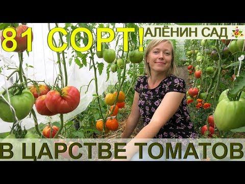 81 сорт томатов 'живьем' сразу в одном видео! Экскурсия в теплицы коллекционера сортов томатов!