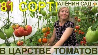 81 сорт томатов