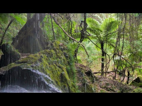 [ 4K UHD ] 八丈島 亜熱帯の森  :Subtropical forest in Hachijo-island,