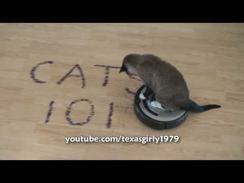 Smart Roomba Cat Max-Arthur writes CATS 101. Super AWESOME!!! (fast speed)