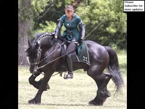 Friesian Horse | Collection Of Horse Pictures