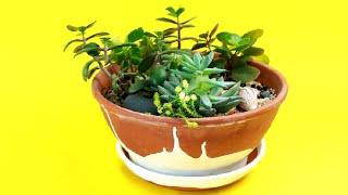 видео Мини-сад в горшке своими руками: композиции из комнатных цветов на фото