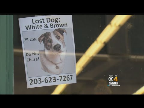 Owner Of MIssing Mass Pike Dog: 'He's My Best Friend'