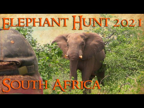 Elephant Hunt 2021 early season Safari