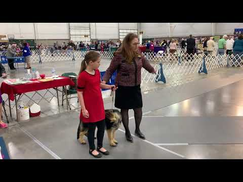 My first Dog Show - Mid Continent Kennel Club 2018