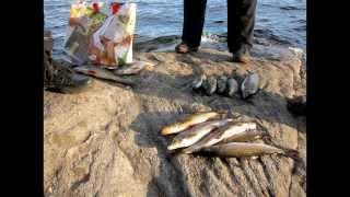 Рыбалка в Карелии 2013(Фото-видео отчёт о поездке в Северную Карелию в августе 2013. Топозеро Музыка участвующая в клипе: ACDC - Big..., 2013-12-31T11:44:00.000Z)