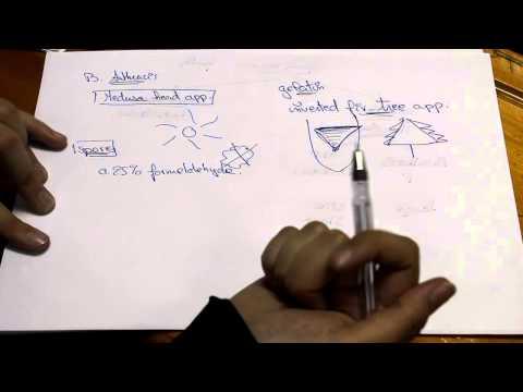 Practical Microbiology - Pathobiology Module - AMSP2019 - Nourhane Nabawi