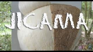 What Is Jicama? / Jicama Slaw Recipe