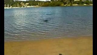NOKIA N90 - Nikita the Rottweiler swimming